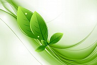Green Eco Leaves Background Vector