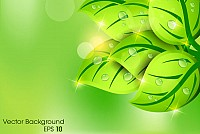 Green Leaf Spring Background Vector
