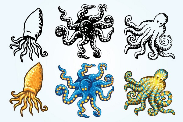 Octopus Vector Graphics