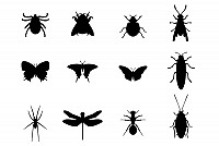 12 Insects Vector Silhouettes