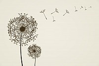 Dandelion Vector Graphic