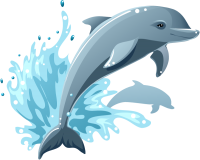 Dolphin Vector Graphic