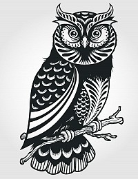 Artistic Owl Vector Illustration