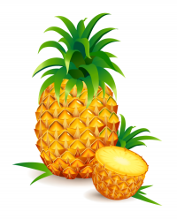 Realistic Pineapple Vector
