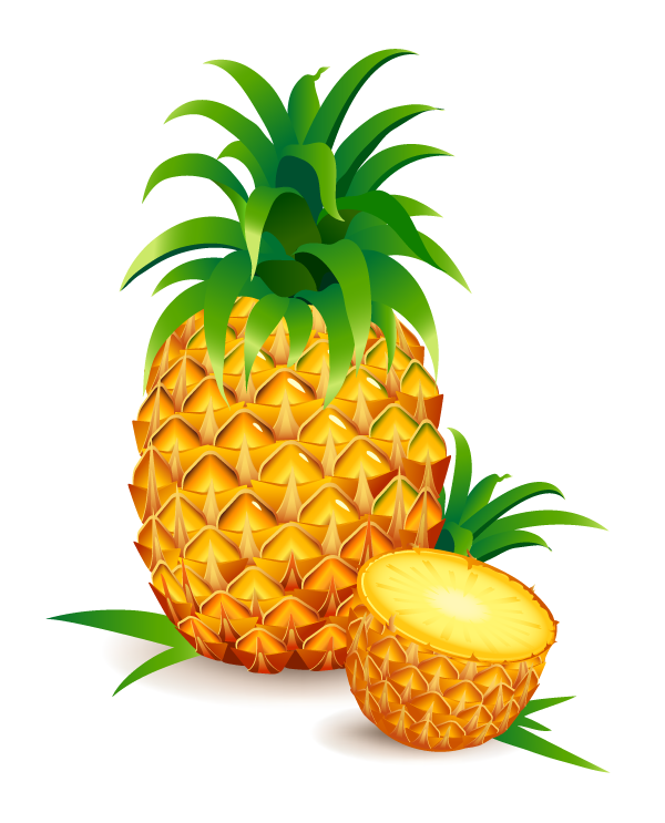Realistic Pineapple Vector | TopVectors.com Cute Coffee Background