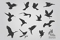 Birds Silhouettes Vector Stock